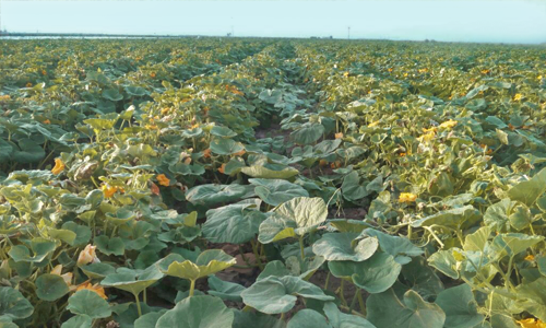 Fuensanabio frutas y hortalizas ecol gicas for Rotacion cultivos agricultura ecologica
